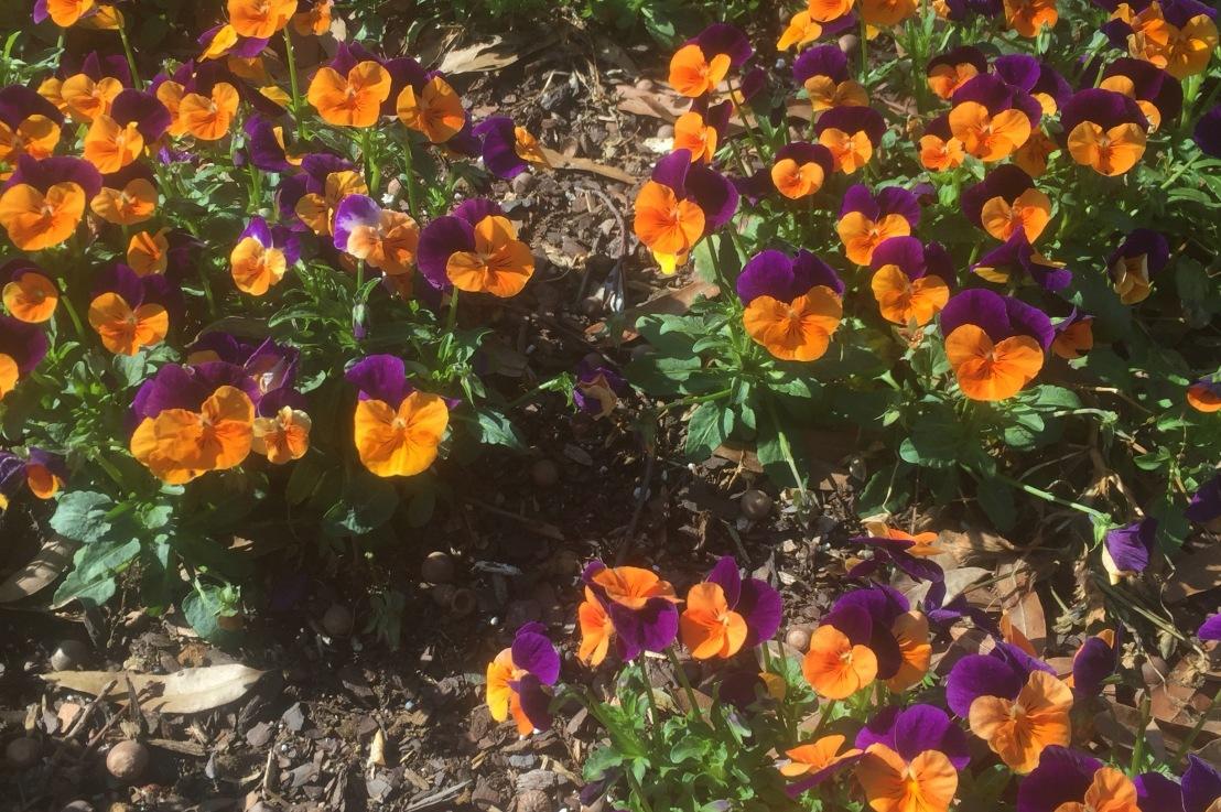 Spring in bloom