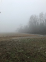 A foggy morning at the field.