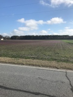 A purple and green field.