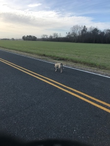 My neighbor's dog followed me on a recent run.