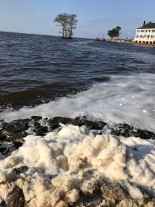 Foam on the water of Edenton Bay.