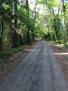 Part of the course of the Nags Head Woods 5k.