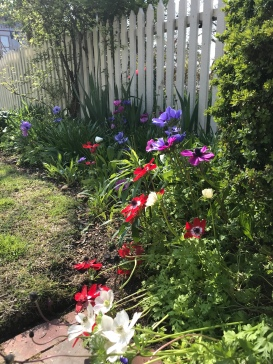 Poppies are among the flowers lining the fence.