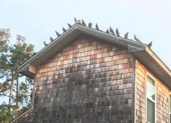Pigeons vie for a spot on the room of this building at the Scarborough Inn.