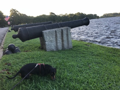 Tonka, our youngest dog, checks out the cannons that were donated to Edenton by France sometime near the Revolutionary War.