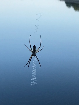 A spider and its web.