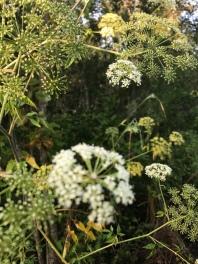 Flowers at the Pocosin Lakes Wildlife Refuge.
