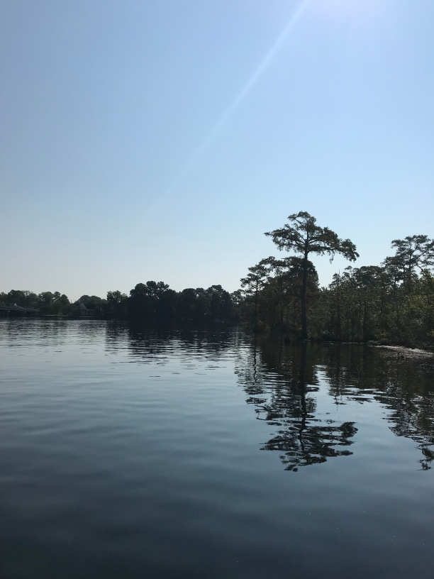 The view from the boardwalk shows the black water of the Scuppernong River. It is a blackwater river that flows through Tyrrell County and Washington County, North Carolina, into the Albemarle Sound.
