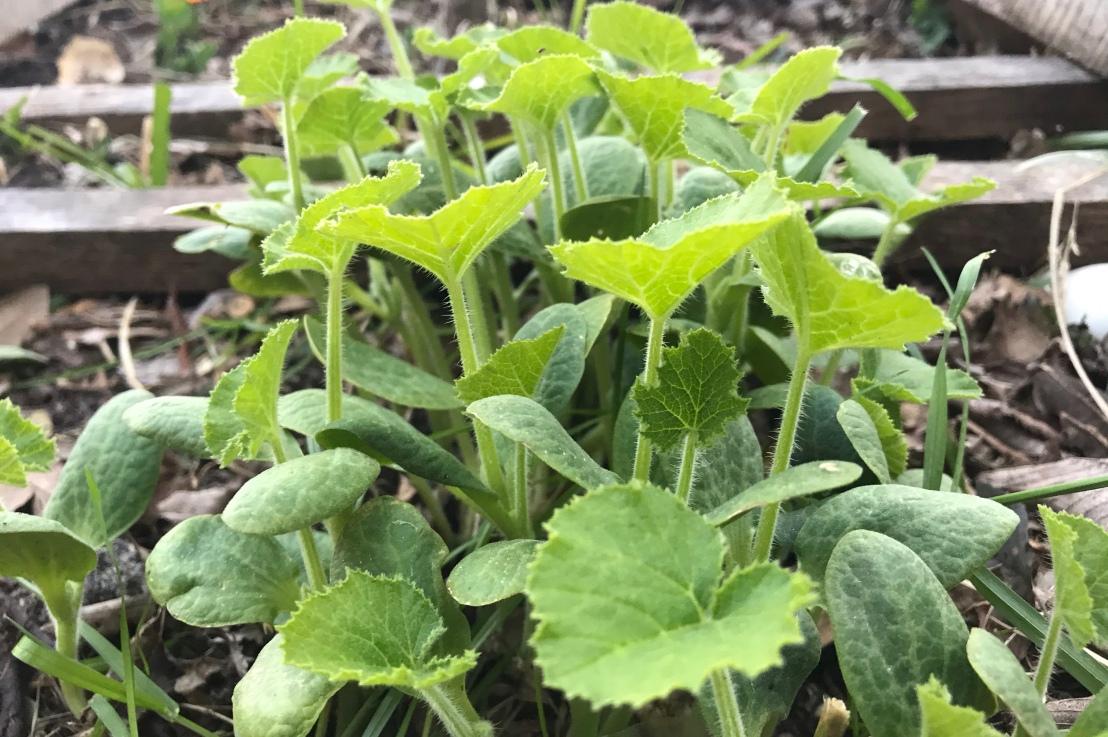 Gardening: A newbie'stake